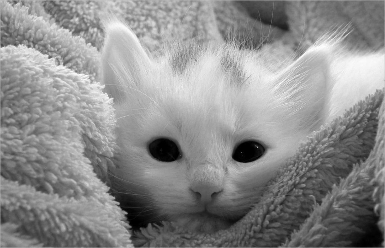 Un chaton bien au chaud